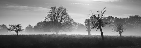 Moody black and white Autumn landscape Royalty Free Stock Photography