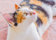 moody cat royalty free stock images