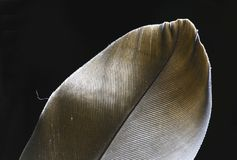 Moody close-up of a feather under soft lights stock image