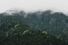Moody dark forest landscape with cloud and mist. royalty free stock images