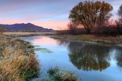 Moody dawn morning by a flowing stream in the rural Utah mountains. Royalty Free Stock Photography