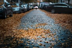Moody day in the city. Orange, yellow leaves on the cars during a autumn period. Prague city in a Europe. Fall background with veh royalty free stock image
