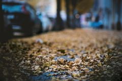 Moody day in the city. Orange, yellow leaves on the cars during a autumn period. Prague city in a Europe. Fall background with veh stock photo