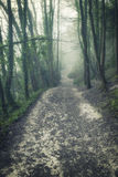 Moody dramatic foggy forest landscape Spring Autumn Fall Stock Photos