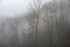 Moody dramatic foggy forest landscape Spring Autumn Fall Royalty Free Stock Photos