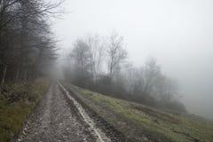 Moody dramatic foggy forest landscape Spring Autumn Fall. Dramatic moody foggy forest landscape Spring Autumn Fall Royalty Free Stock Image