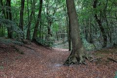 Moody forest with leaves. Path with leaves in a moody forest. In the foreground a tree with roots stock image