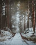 A moody forest road in North Zealand, Denmark during wintertime.