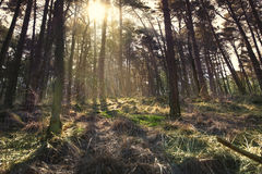 Moody forest with sunlight Stock Photo