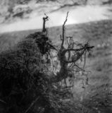 Moody Growth on Tree Stump stock photo
