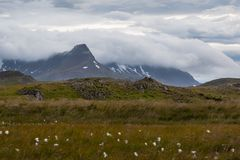 Moody icelandic skies, Mountains, flowers royalty free stock photography
