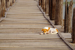 Moody image of dog lying on textured wooden boardwalk Stock Photo