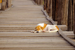 Moody image of dog sleeping on textured wooden boardwalk Stock Images