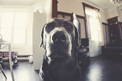 Moody canine stock photo