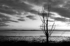 Moody lake shore at sunset, with sun light reflecting on water, and skeletal trees Stock Photo