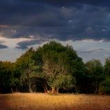 Moody Landscape Stock Photos