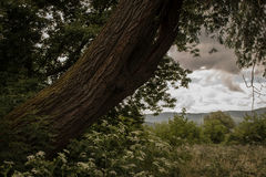 MOODY LANDSCAPE WITH A OLD TREE TRUNK AND CLOUDS Royalty Free Stock Image