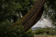 MOODY LANDSCAPE WITH A OLD TREE TRUNK Royalty Free Stock Photos