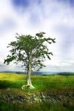moody marzycielski drzewo Obraz Royalty Free