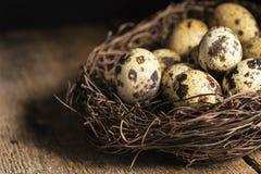 Moody natural lighting vintage retro style image of quaills eggs Stock Image