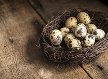 Moody natural lighting vintage retro style image of quaills eggs Stock Photography