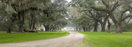 Southern plantation in the fog. Moody shot of Southern plantation in the fog in South Carolina Royalty Free Stock Image