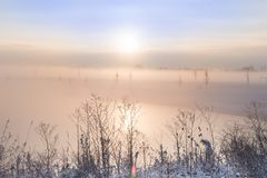 Moody sunrise in winter fog royalty free stock images