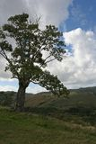 Moody Tree. Moody landscape of a lone tree on a hill overlooking a valley stock image