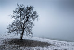 Moody tree Stock Image