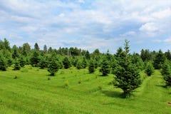 Moody Tree Farm. Balsam fir Christmas trees at Moody Tree farm located near Saranac Lake, New York Royalty Free Stock Photo