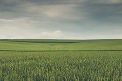 Moody_Tuscany_Italy Royalty-vrije Stock Fotografie