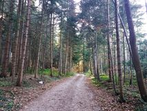 Moody view of autumn`s fir forest road stock image