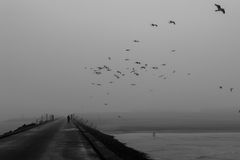 Moody walk on the pier. A moody walk on the south pier in IJmuiden with fog, rain, and lots of birds stock image