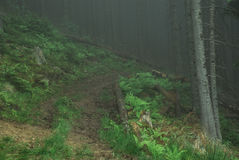Moody way across the mountain forest in fog after rain. Moody way across the mountain forest in fog after rain in Carpathians Stock Photos