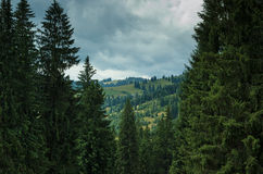 Moody weather in Carpathian mountains forest Royalty Free Stock Images
