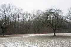 Moody winter forest Stock Photography