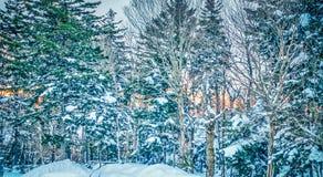 Mooi aard en landschap rond de toevlucht van de sneeuwschoenski in cass stock afbeeldingen