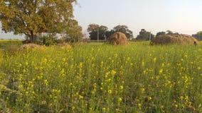 Mooi aard, tempel en Landbouwbedrijf in Noord-India royalty-vrije stock afbeelding