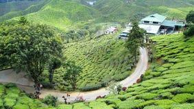 Mooi aardlandschap in Maleisië, Cameron Highland stock afbeelding