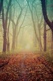 Mooi abstract de herfstlandschap Royalty-vrije Stock Foto's