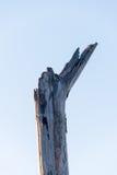 Mooi abstract droog hout op hemelachtergrond Royalty-vrije Stock Afbeeldingen