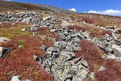 Mooi Alpien landschap in Rocky Mountains, Colorado waar vele 13ers en 14ers worden gevestigd Royalty-vrije Stock Foto