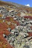 Mooi Alpien landschap in Rocky Mountains, Colorado waar vele 13ers en 14ers worden gevestigd Royalty-vrije Stock Afbeelding
