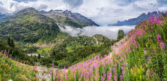 Mooi alpien panorama met een schitterend berglandschap en bloeiende bloemen Stock Afbeelding