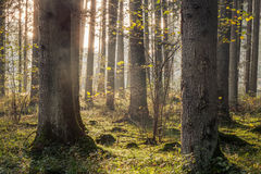 Mooi Autumn Forest royalty-vrije stock afbeelding