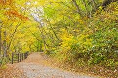 Mooi Autumn Season Stock Afbeelding