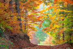 Mooi Autumn Trees in kleurrijke bos, gele, groene Stock Afbeelding