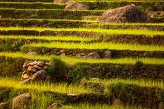Mooi Aziatisch landschap royalty-vrije stock foto