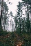 Mooi beeld in een ontbossing stock fotografie