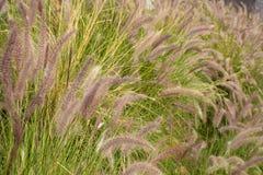 Mooi beeld van Grasgebied in de ochtend royalty-vrije stock fotografie